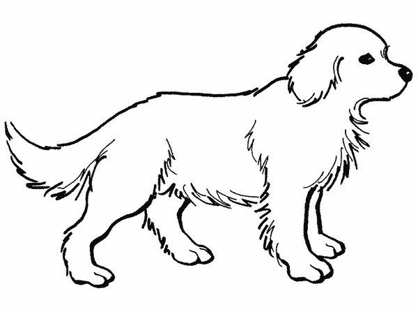 Dessin de chien à colorier et imprimer