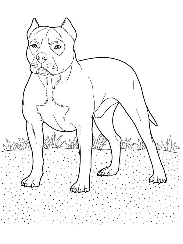 Activité de coloriage chien à colorier