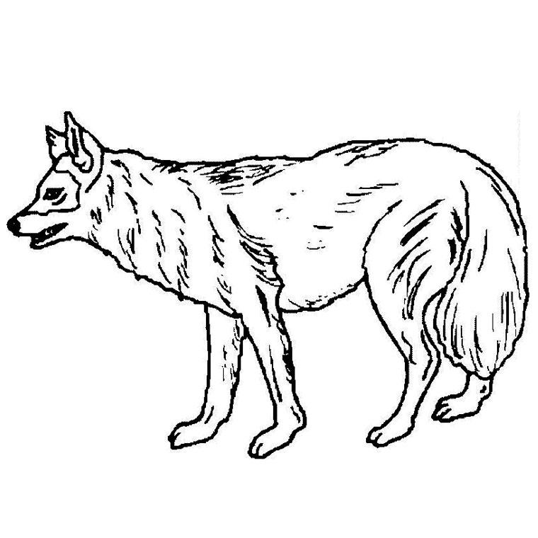 Coloriage de chien à imprimer