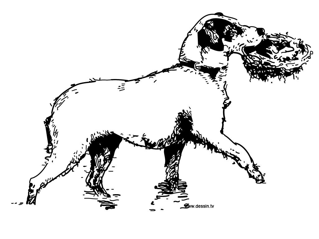 Coloriage de chien gratuit