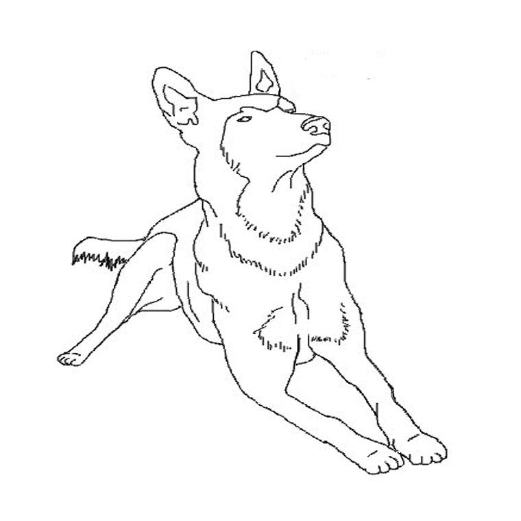 Dessin gratuit chien à imprimer