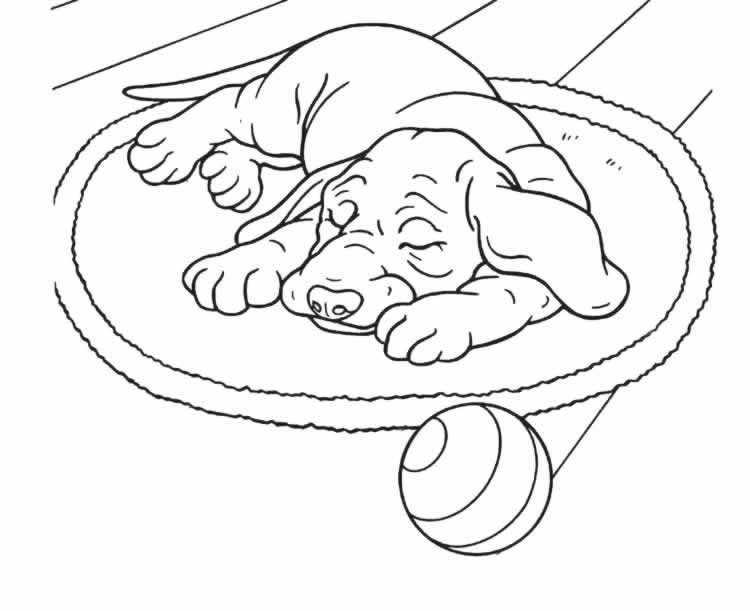 Image de chien a dessiner