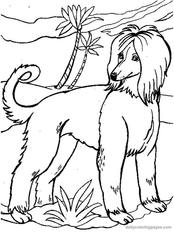 Coloriage chien imprimer et colorier