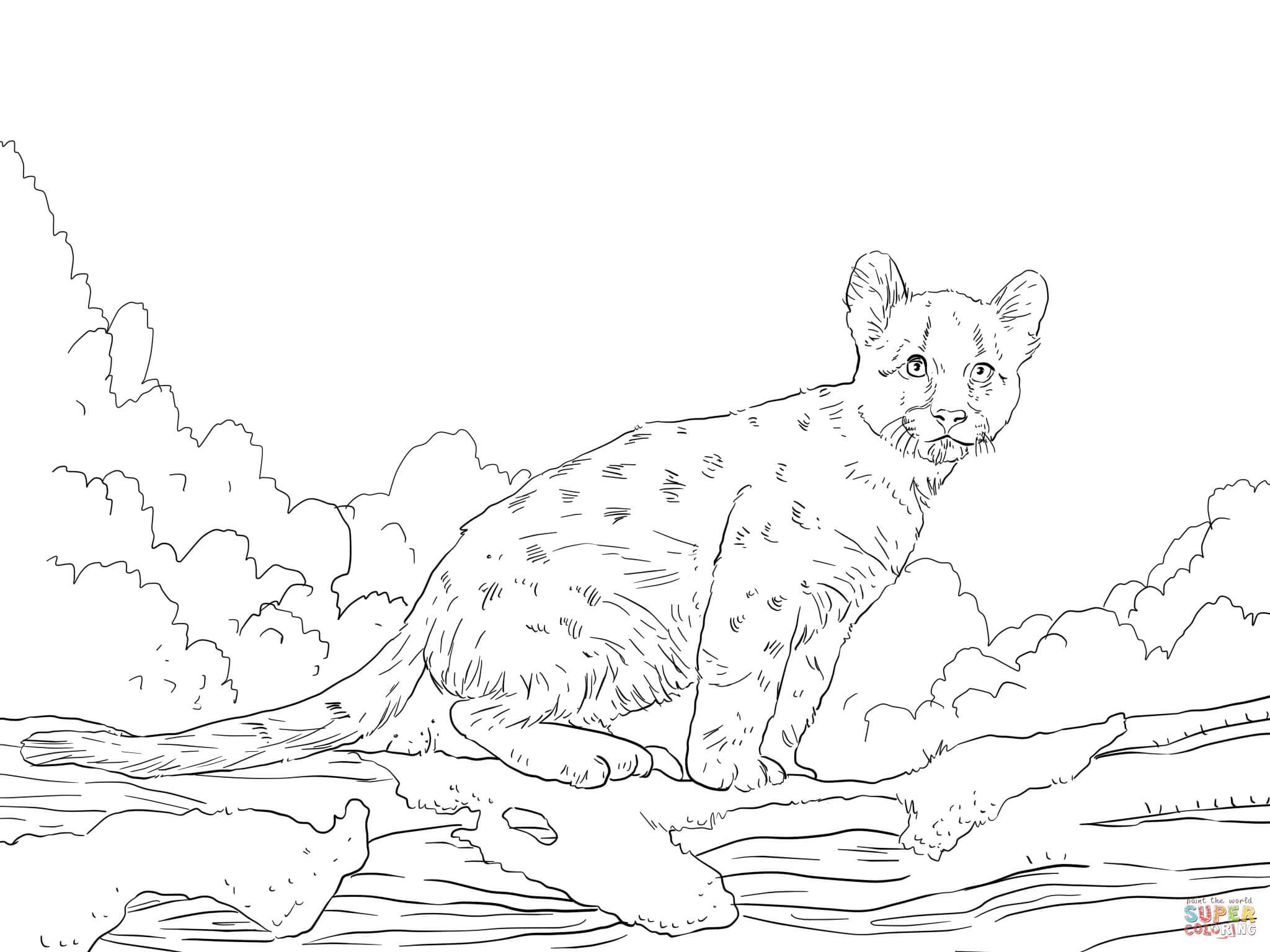 Coloriage cougar a imprimer
