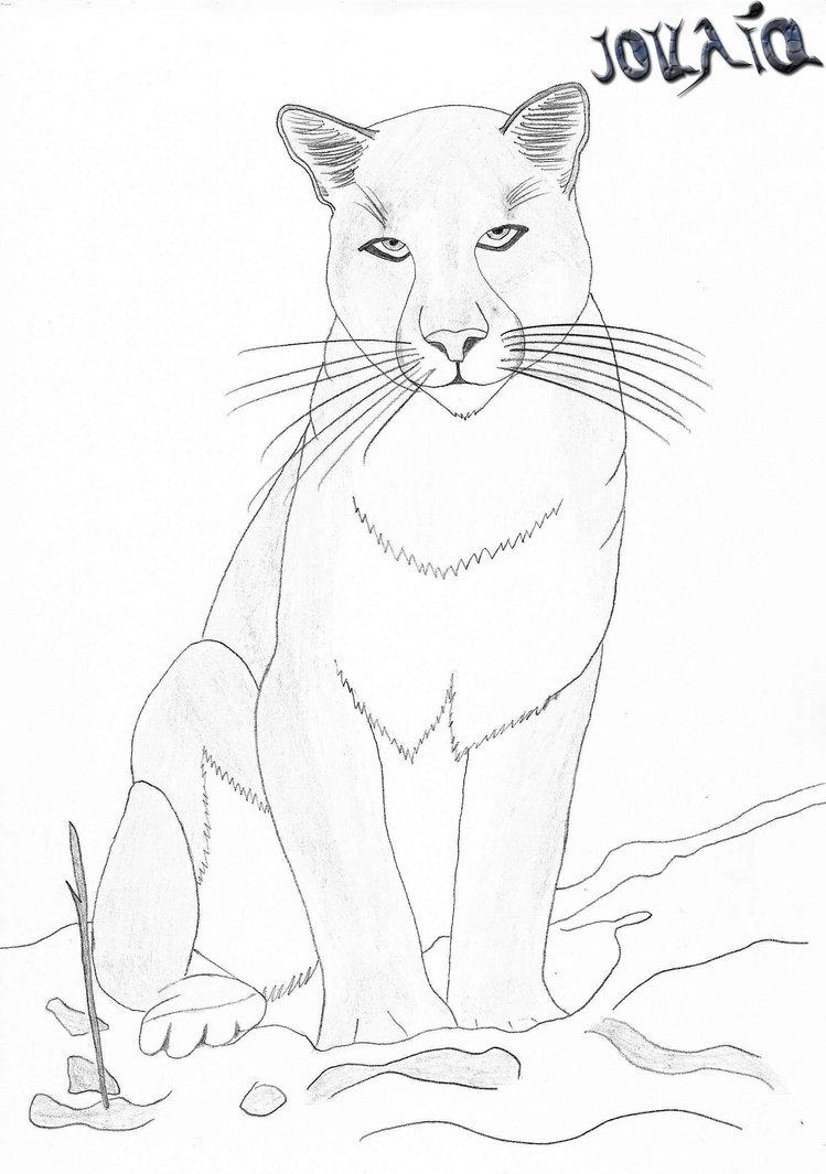 Dessin gratuit de cougar a imprimer et colorier