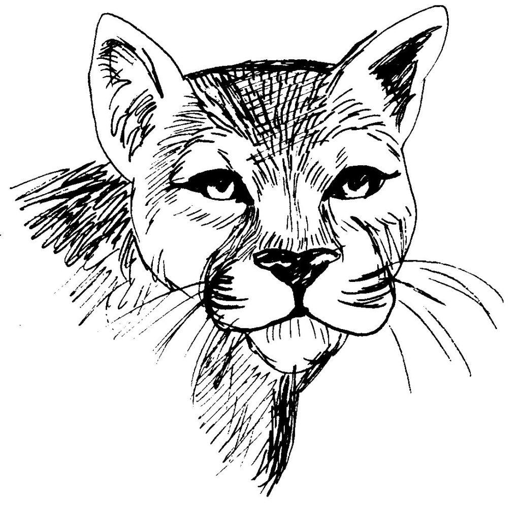 40 dessins de coloriage cougar imprimer sur page 2 - Coloriage tete de chat ...