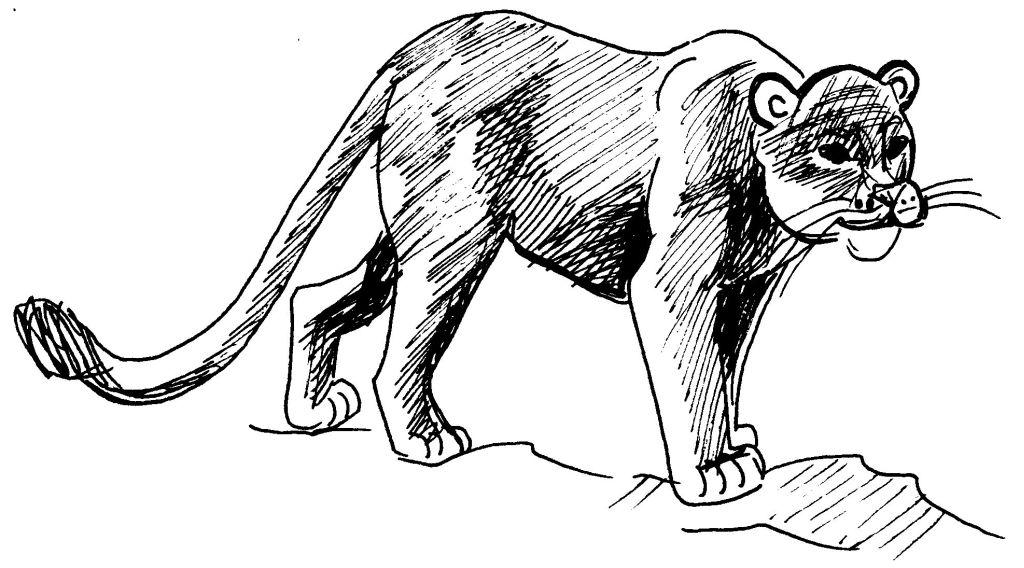 Dessin gratuit de cougar à imprimer