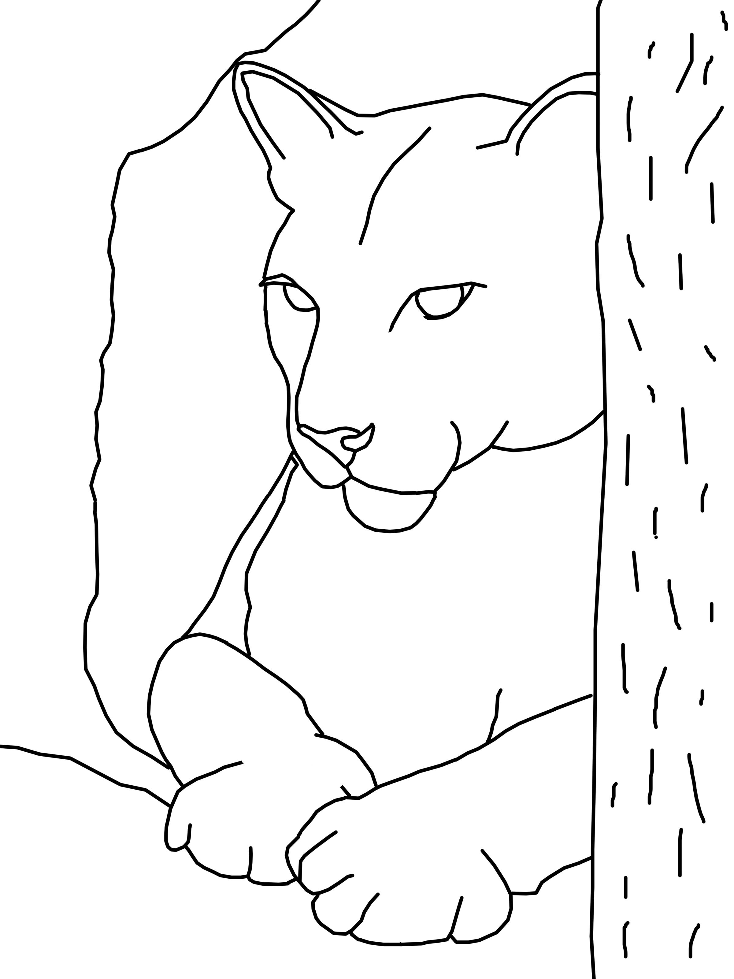 Dessin de cougar a imprimer
