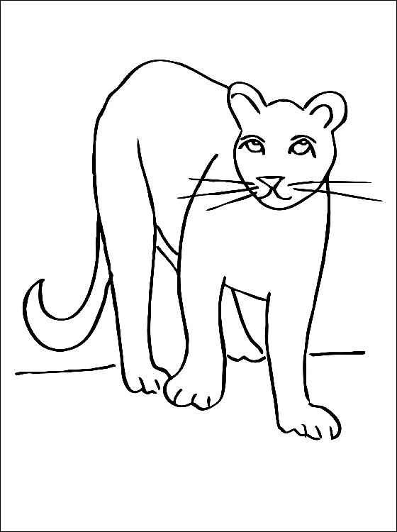 Coloriage de cougar a imprimer