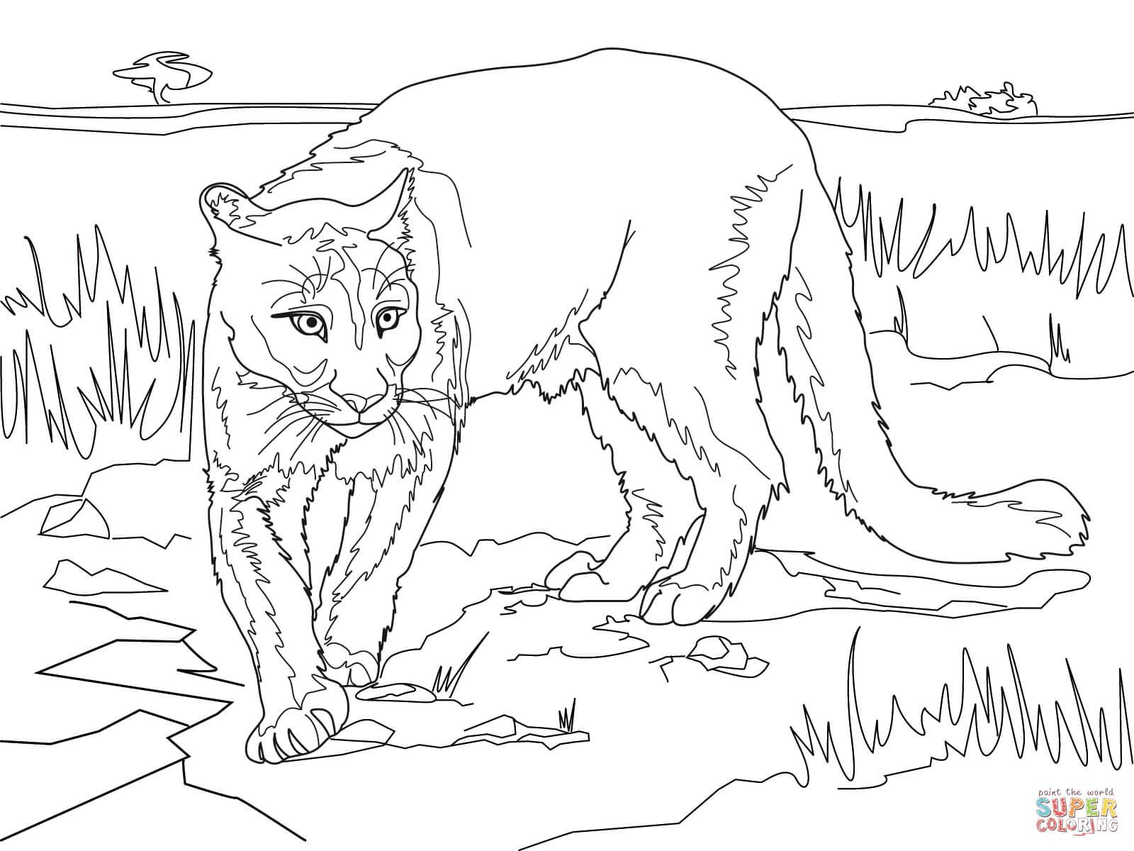 Coloriage de cougar gratuit a imprimer