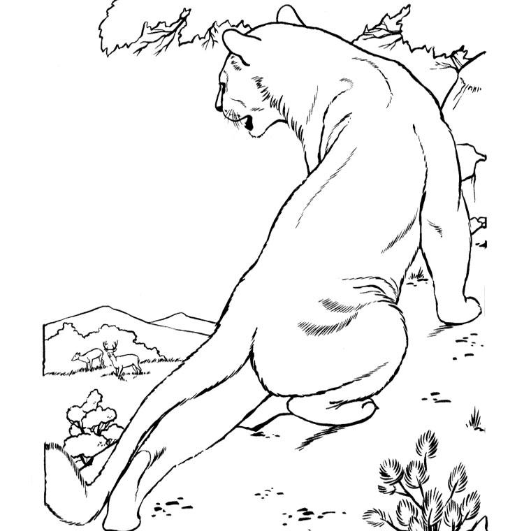 Dessin de cougar à imprimer