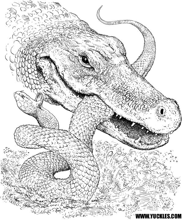 national geographic animal coloring pages - photo#35