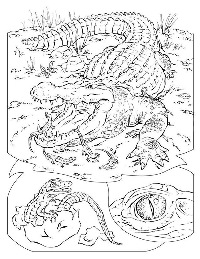 Dessin gratuit de crocodile a imprimer