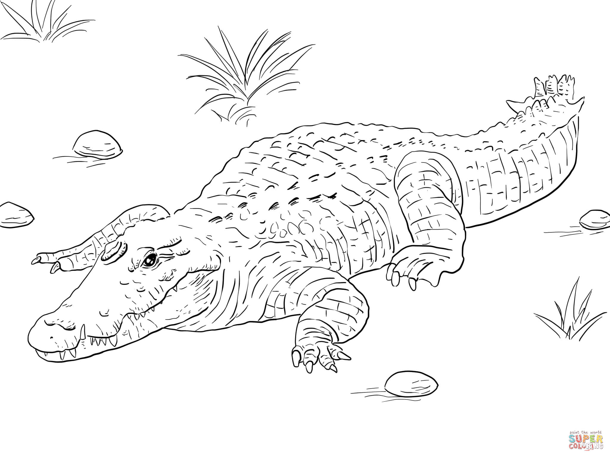 Coloriage crocodile gratuit