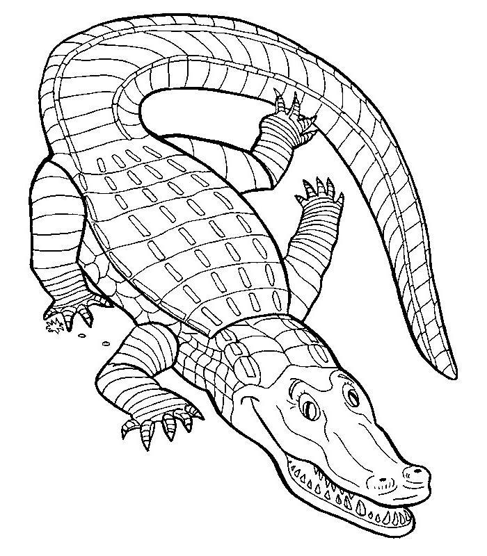 Dessin gratuit crocodile a imprimer et colorier