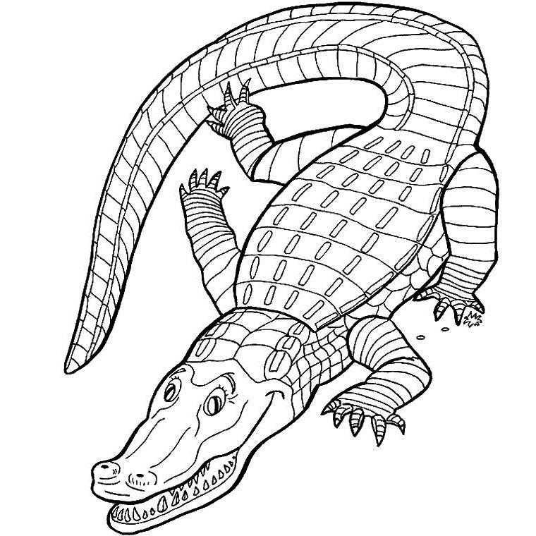 Dessin gratuit de crocodile a imprimer et colorier