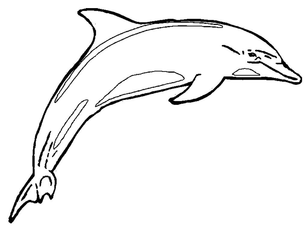 Dessin de dauphin a colorier et imprimer