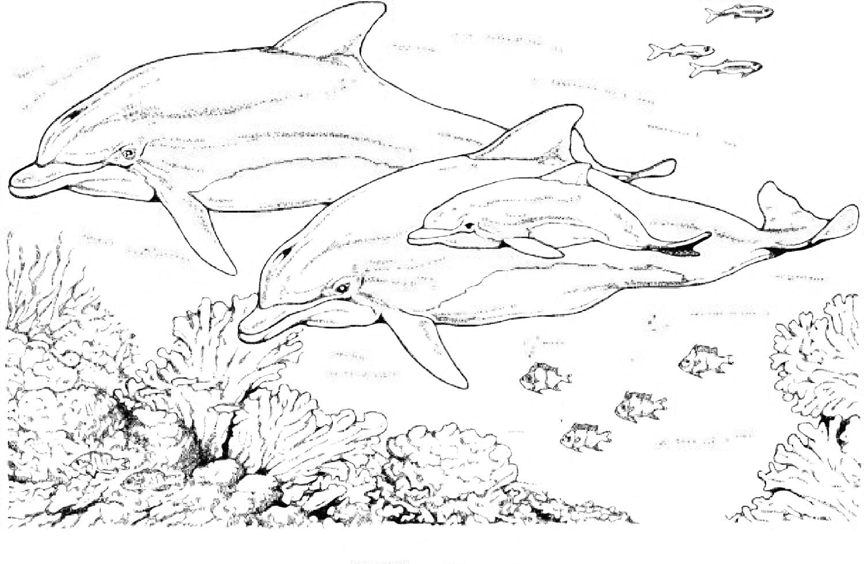 Dessin de dauphin pour imprimer et colorier