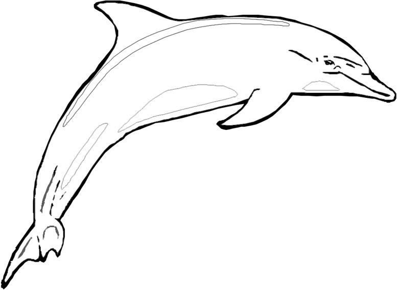 Dessin de dauphin