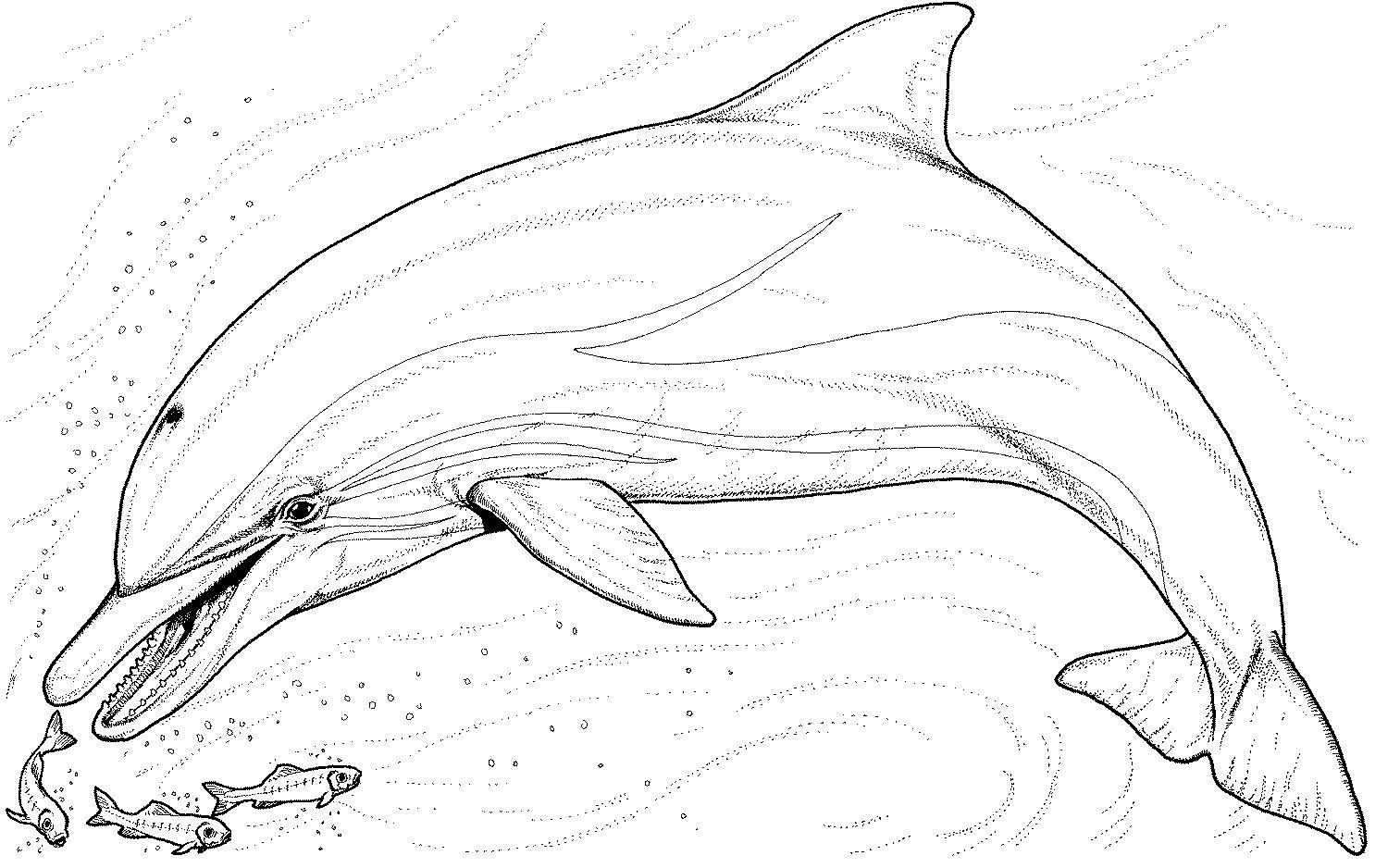 Coloriage de dauphin à colorier