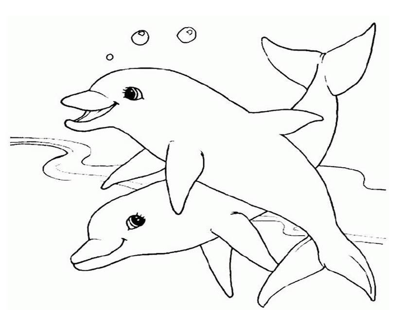 Coloriage de dauphin à imprimer
