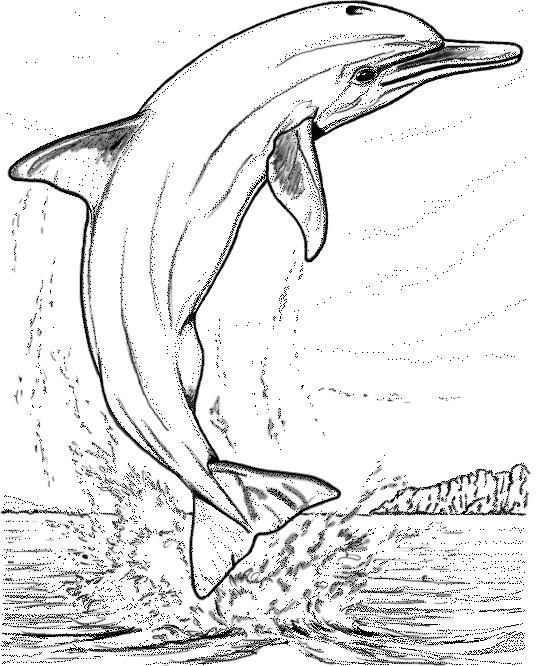 Activité de coloriage dauphin à colorier