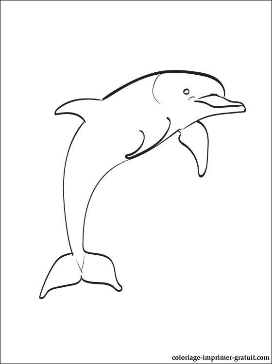 Activité de coloriage dauphin a colorier