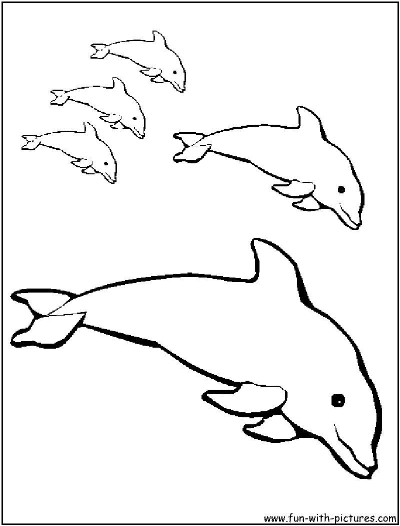 Dessin gratuit dauphin a imprimer et colorier