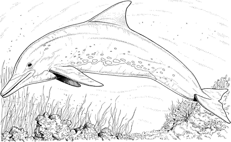 Image de dauphin a imprimer et colorier