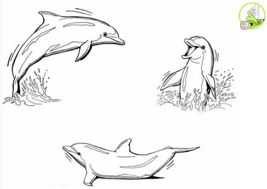 Dessin de dauphin a imprimer