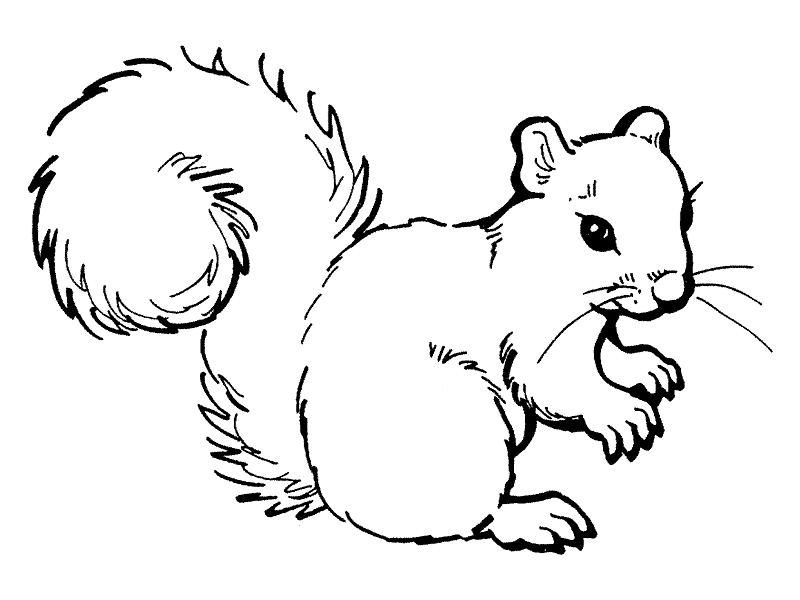 coloriage home animals écureuils gratuit coloriage écureuils