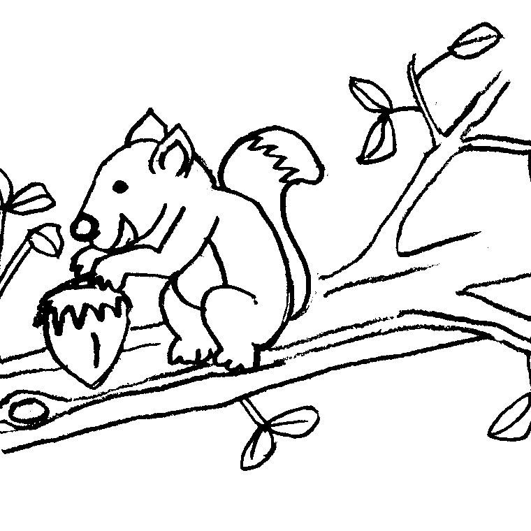 le coloriage ecureuil domestique pour imprimer le coloriage ecureuil