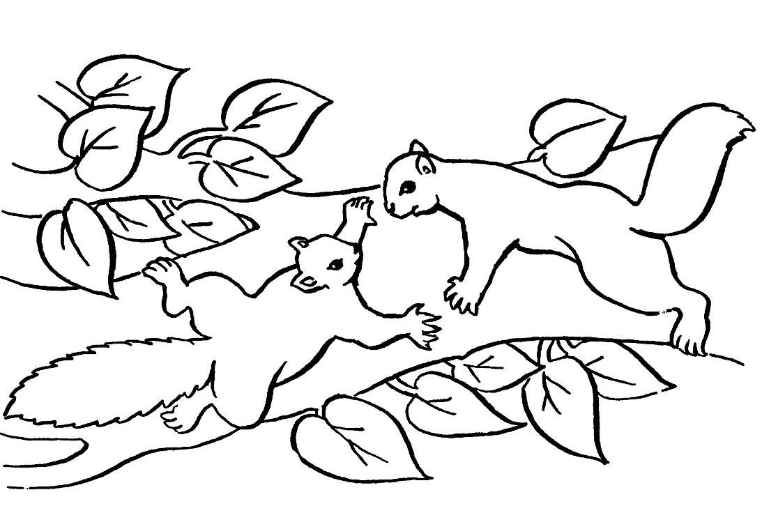 coloriages ecureuils coloriage coloriage ecureuil coloriage ecureuils - Coloriage Cureuil