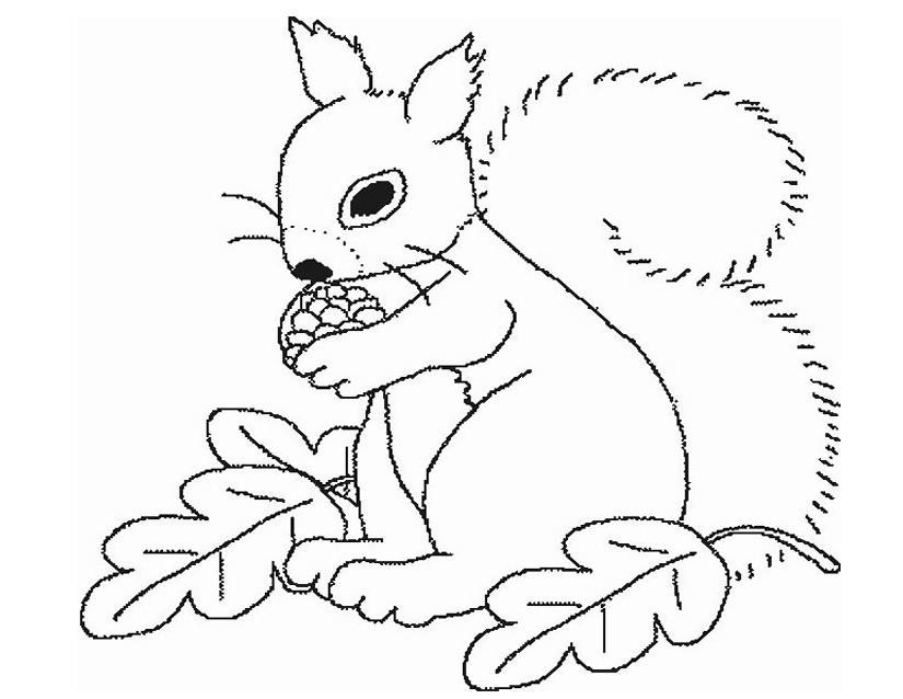 67 dessins de coloriage cureuil imprimer sur page 5 - Coloriage d ecureuil ...