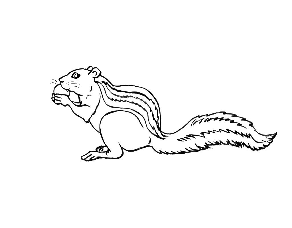 67 dessins de coloriage cureuil imprimer sur laguerche - Coloriage marron ...