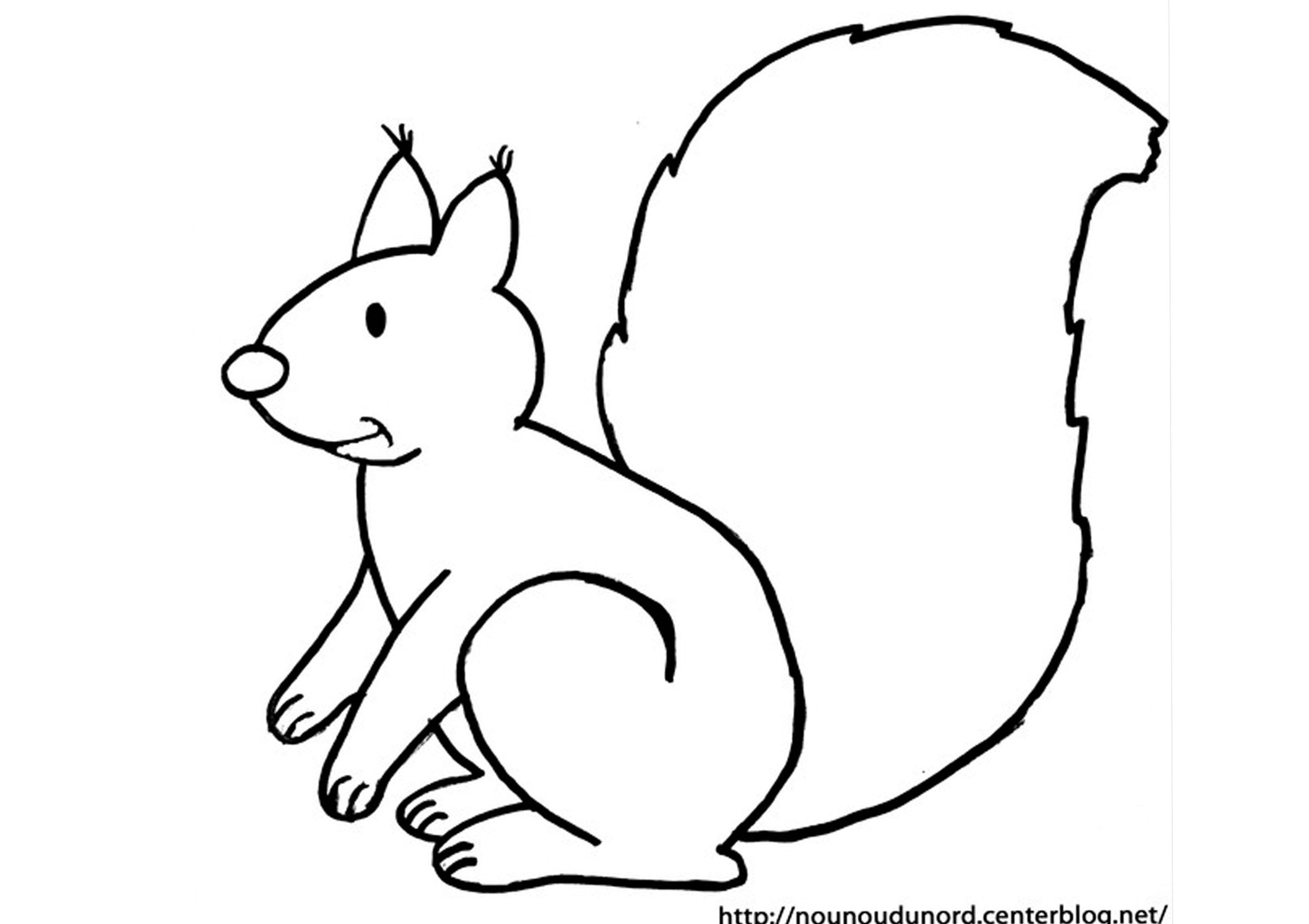 coloriage écureuil dessiné