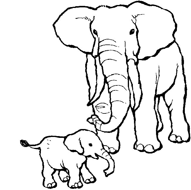 Dessin couleur elephant - Elephant image dessin ...