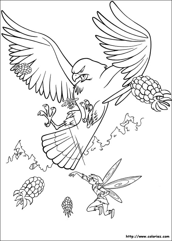 Dessin #13009 - Coloriage faucon à colorier