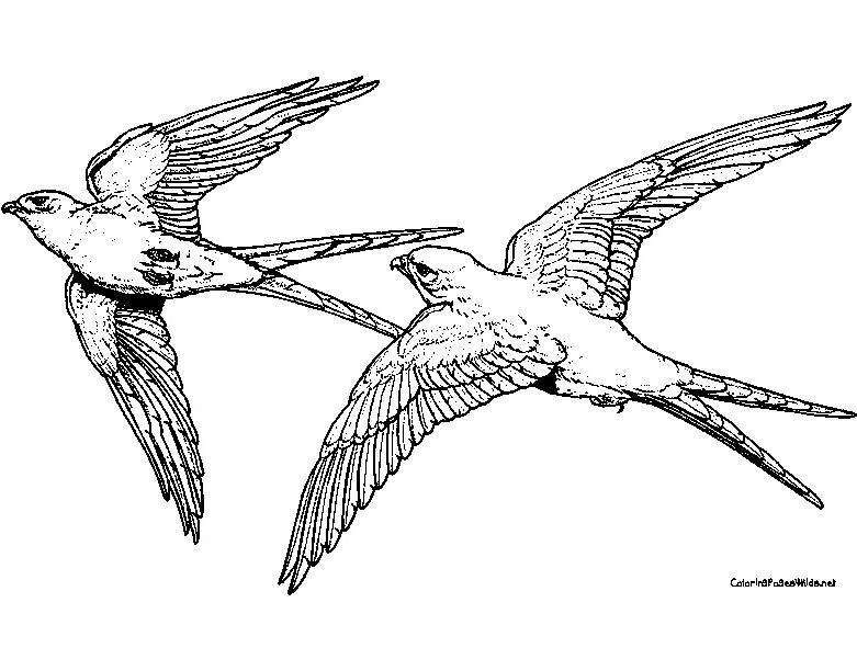 S lection de coloriage faucon imprimer sur - Dessin de faucon ...