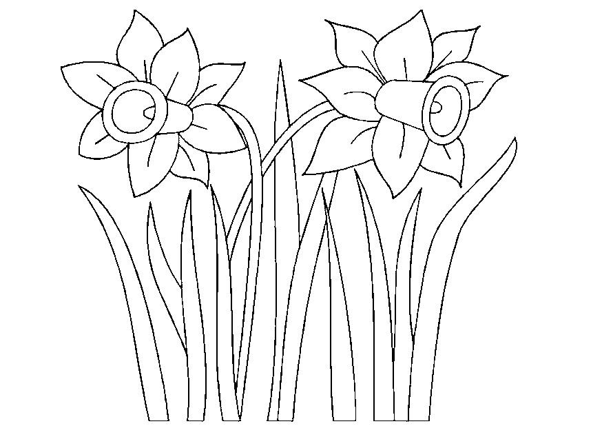 coloriage fleur jonquilles