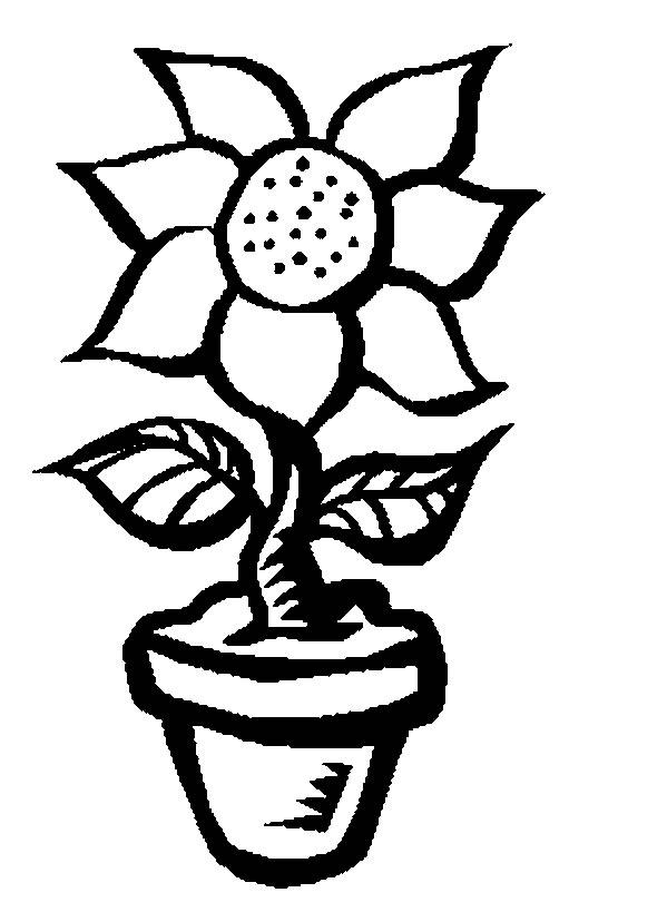 afficher cette image de fleurs