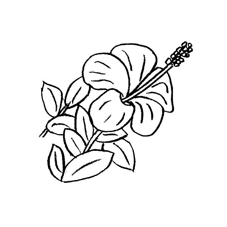 imprimer le coloriage fleur hawaienne pour imprimer le coloriage fleur