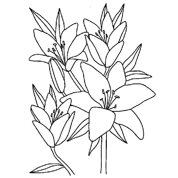 le coloriage fleur de vanille pour imprimer le coloriage fleur