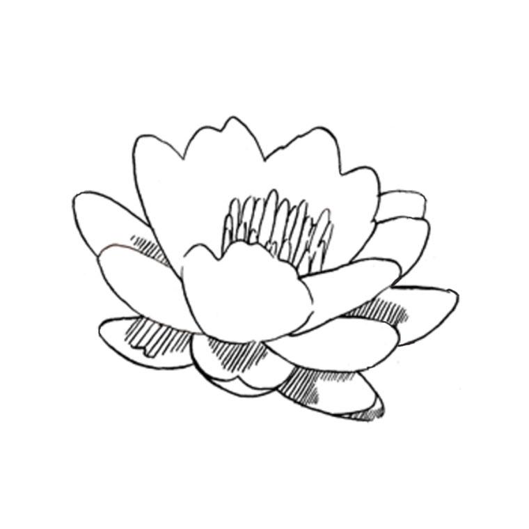 imprimer le coloriage fleur de lotus pour imprimer le coloriage fleur