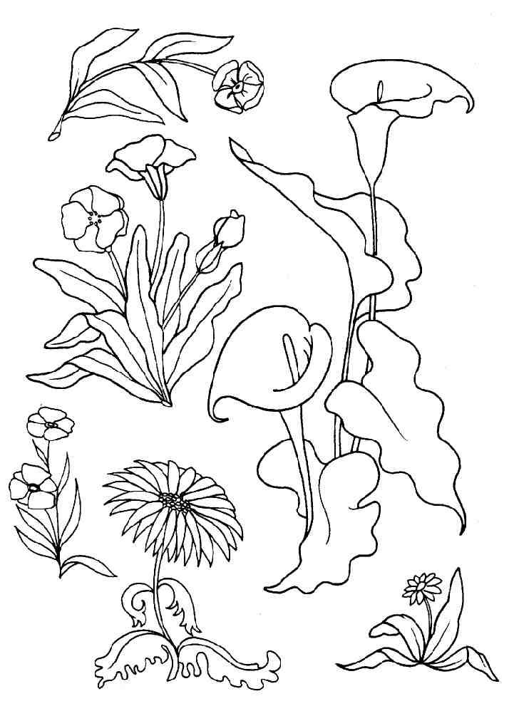 coloriage fleurs sauvages