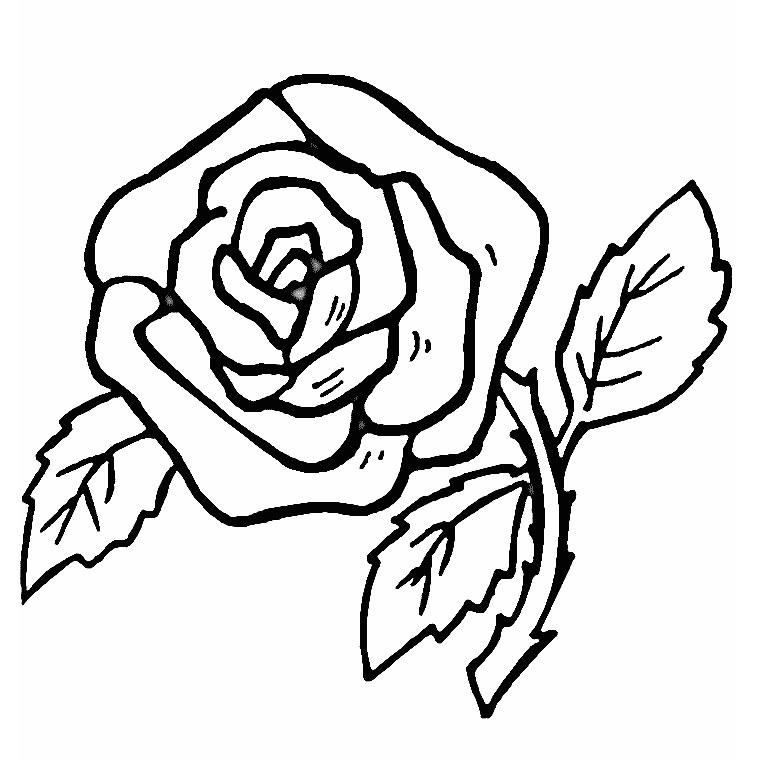 coloriage fleur rose