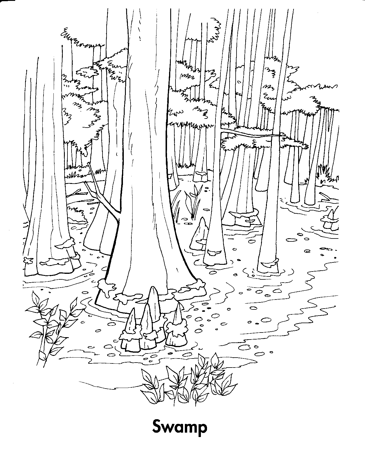 Coloring Pages Of Wetland Animals : Free coloring pages of color forest ecosystem