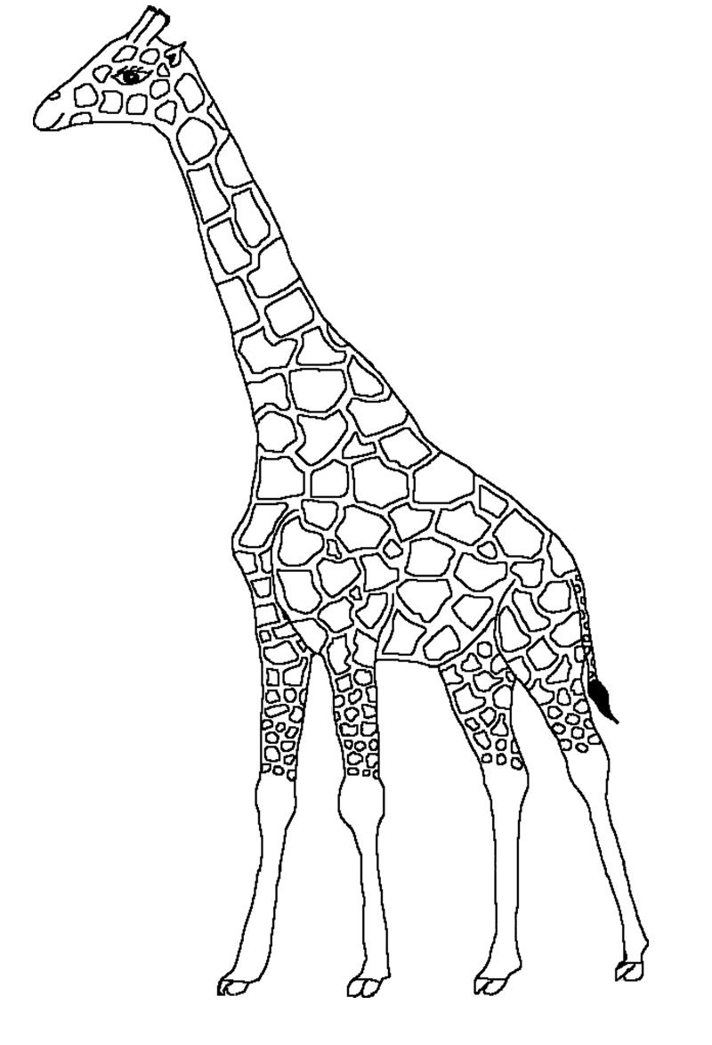 S lection de coloriage girafe imprimer sur - Girafe a imprimer ...
