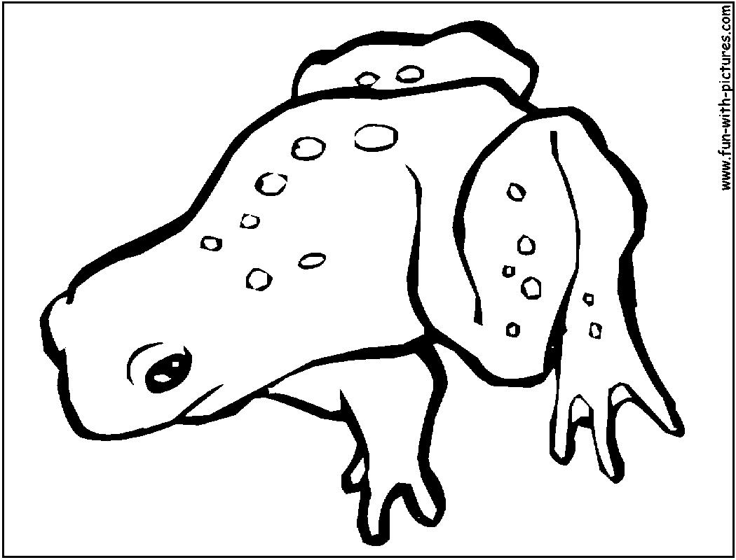 grenouille dessin à colorier