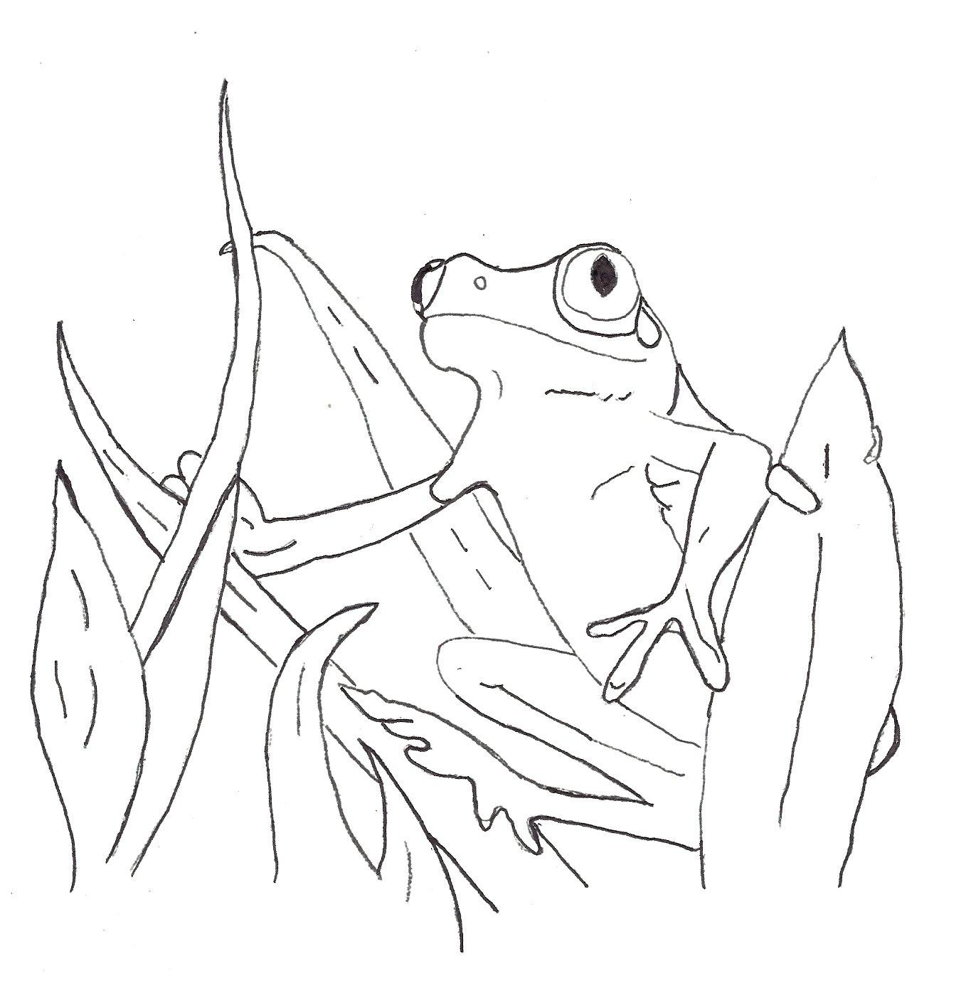 gratuit à imprimer grenouille dessins à colorier pour enfants